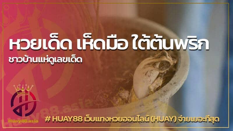 Read more about the article หวยเด็ด เห็ดมือ ใต้ต้นพริก ชาวบ้านแห่ดูเลขเด็ด